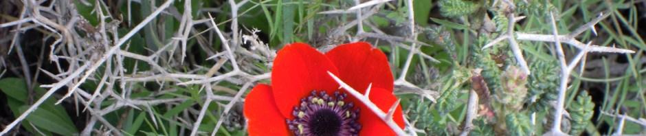 """""""Vårens första Anemon"""""""